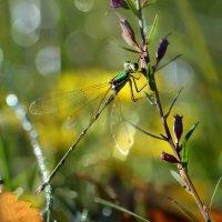 В  лесной  траве :: Геннадий С.