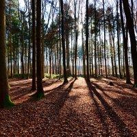 Прогулка по лесу ... :: Владимир Икомацких
