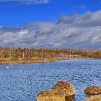 Лебеди  на  пруду. :: Валера39 Василевский.