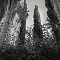 Bellapais Abbey :: Anna Lipatova