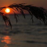Взгляд солнца :: Annet-T