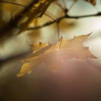 В лучах солнца :: Татьяна Курамшина