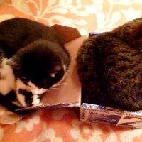 Как две большие кошки уместились в одной маленькой коробочке. :: Mary Коллар