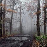 В туманную одевшись тишину... :: Лесо-Вед (Баранов)