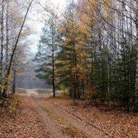 Осыпаясь листопадной грустью... :: Лесо-Вед (Баранов)