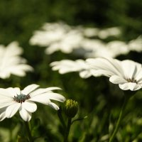 Цветы :: Galina Belugina