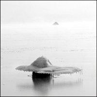 шляпки :: Николай Бабий