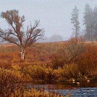 Одинокое древо :: Cerg Smith