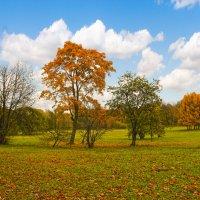 осень :: Герман
