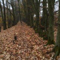В осеннем лесу :: Vladimir