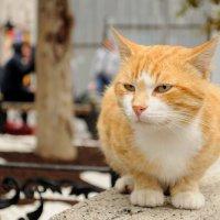 Cat :: Spartak Avetisyan