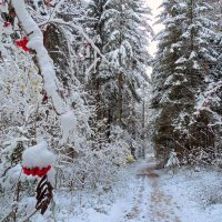 Встречала осень зиму :: Павлова Татьяна Павлова