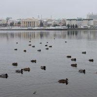 Осенняя флотилия... :: Ната Волга