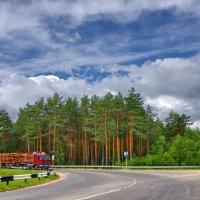 Вологодский лес :: Валерий Талашов