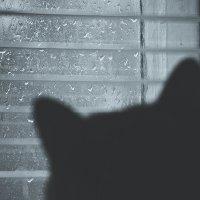 У окна :: Дмитрий