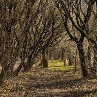 Сказочный лес :: Алексей Соминский
