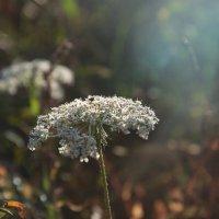 Лесное растение :: Виктория Велес