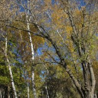 Осень... в парке Октября :: Нина Бутко
