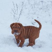 первый снежок :: Седа Ковтун