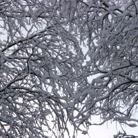 Зимние узоры :: Виктория Браун