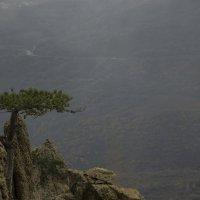 Дерево в тумане :: Александр Калнаузов