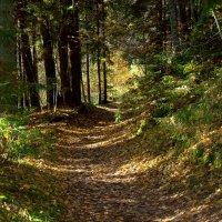 Осень в лесу... :: Марина Кузнецова