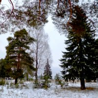 встречаем зиму :: ВладиМер