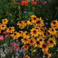 Цветочный фейерверк :: Вера Андреева