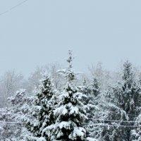 зима пришла :: Светлана Рос