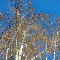 листья опали, а небо - как весной :: Ольга Богачёва