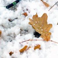 Лист на снегу.. :: Юрий Стародубцев