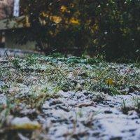 первый снег :: Дмитрий Чернов