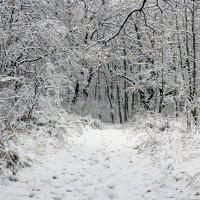 Вход в лесную сказку :: Юрий Стародубцев