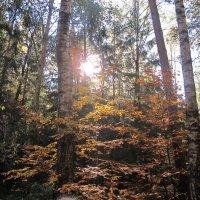 Чарівний ліс... :: Марина Атрохова