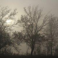 утренний туман :: Юрий Кальченко