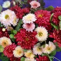 Ярче  яркого нынешние хризантемы :: Нина Корешкова