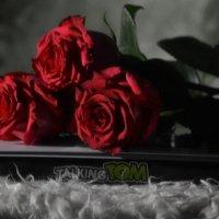 Розы спят :: Валерий Лазарев