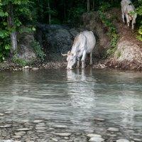Белая корова :: Виктория Велес