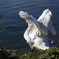 Ангел у воды. :: Alexander Andronik