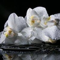 Орхидея :: Sergey Apinis