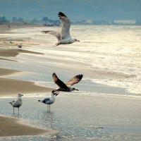 Заброшенный пляж. :: Игорь