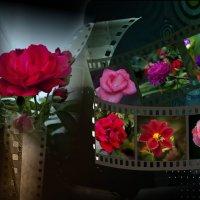 Цветочная фантазия :: Владимир Кроливец