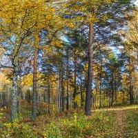 Осенний лес в окрестностях Академгородка, Новосибирск. :: Vadim Piottukh
