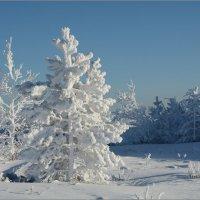 Безмолвие ноября :: Владимир Тюменцев