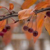 А осень еще не закончилась... :: Ирина Рассветная