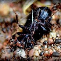 Охота на жука 1 :: Асылбек Айманов