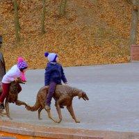 любимое место съемки в парке Гомеля :: Александр Прокудин