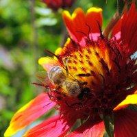 цветочек с жужей :: Александр Прокудин