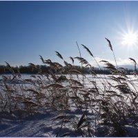 Озеро Светлоярское... :: Фёдор Куракин