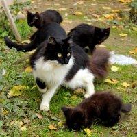 Кошачье семейство :: Светлана
